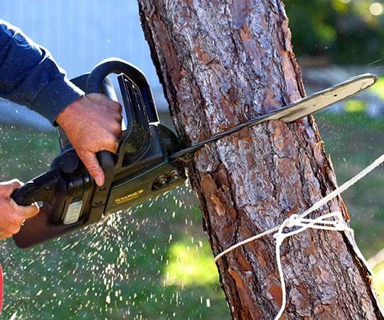 Спил деревьев в Новокузнецке и Кемеровской области