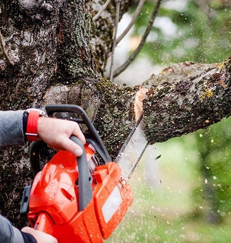 Услуга по спиливанию деревьев в Новокузнецке